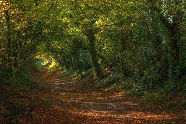 مسیر آسیابهای بادی در ساسکس، انگلستان