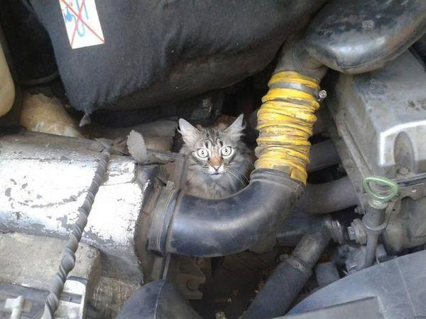 cat-Stuck-in-car-winter-motamem-2