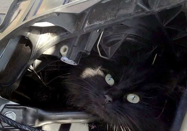 cat-Stuck-in-car-winter-motamem-4