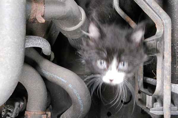 cat-Stuck-in-car-winter-motamem-6