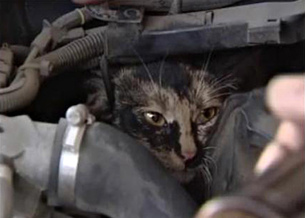cat-Stuck-in-car-winter-motamem-7