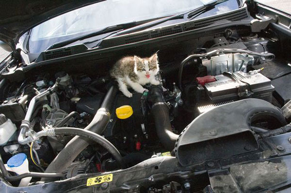 cat-Stuck-in-car-winter-motamem-9