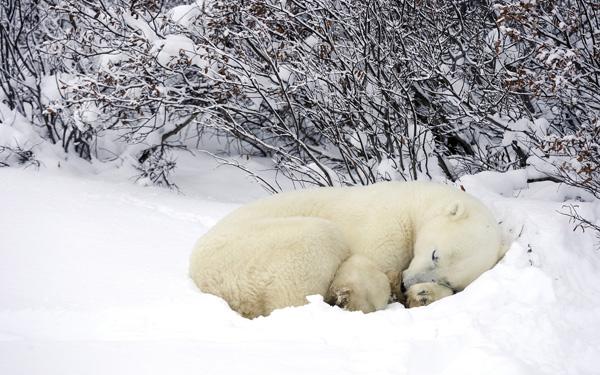 Sleeping--Animal-motamem12