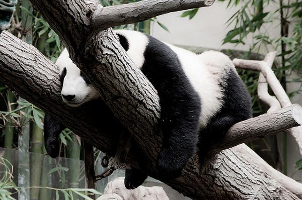 cute_sleepy_animal_motamem_1