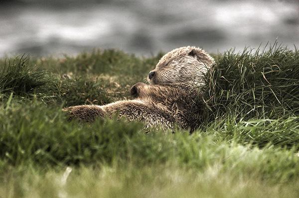 cute_sleepy_animal_motamem_9