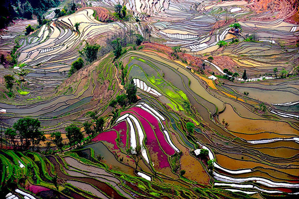 rice-fields-motamem12