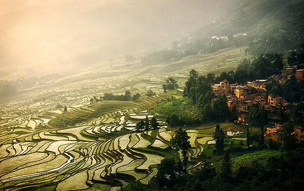 rice-fields-motamem2