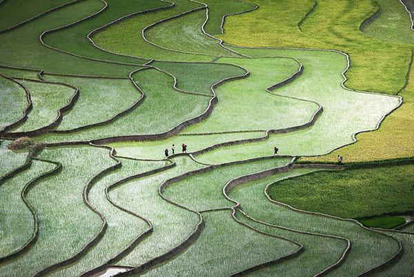 rice-fields-motamem3