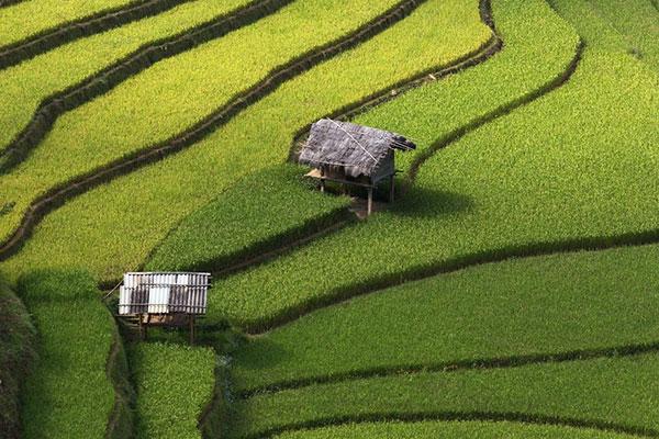 rice-fields-motamem5