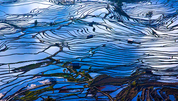 rice-fields-motamem77