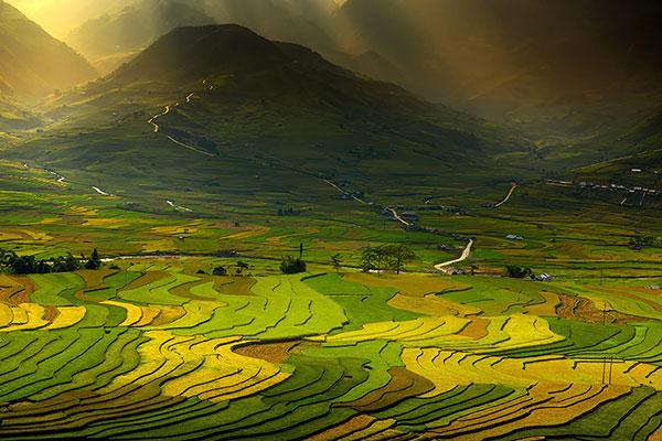 rice-fields-motamem8