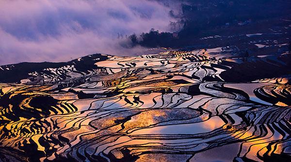 rice-fields-motamem9